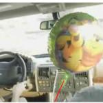 The strange behavior of the balloon festival in the car.