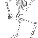 Scheletro tipografico