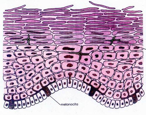 Tessuto epiteliale yahoo dating