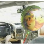 The strange behavior of the balloon of the party in the car.