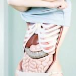 Les photos, sans peau, Koen Hauser