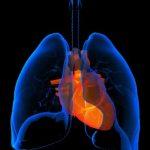 cuore polmone