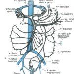 ipertensione-portale-shunt-porto-cavali